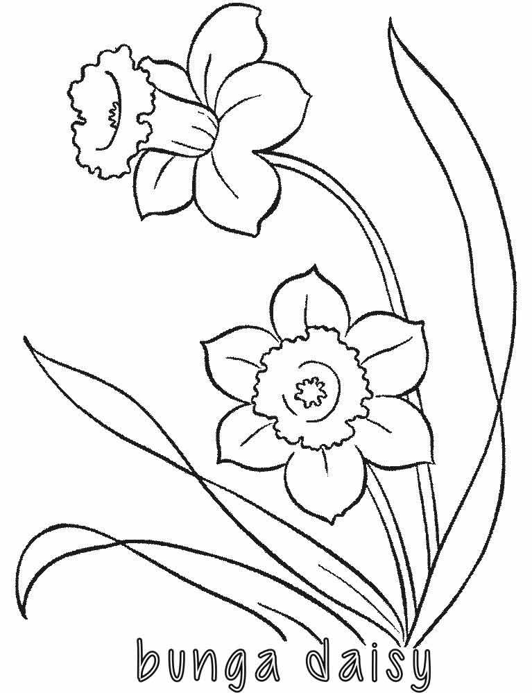 Mewarnai Bunga Daisy Alamendahs Blog