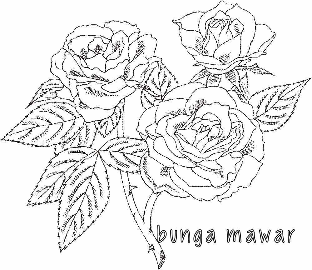 Mewarnai Bunga Mawar-1 | Alamendah's Blog
