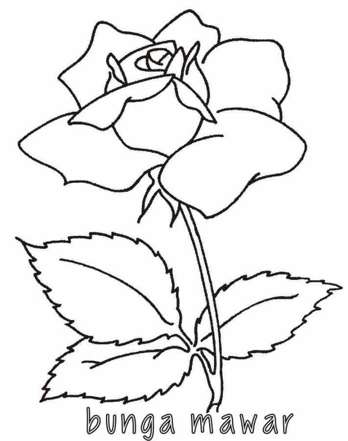 Mewarnai Bunga Mawar 2 Alamendahs Blog