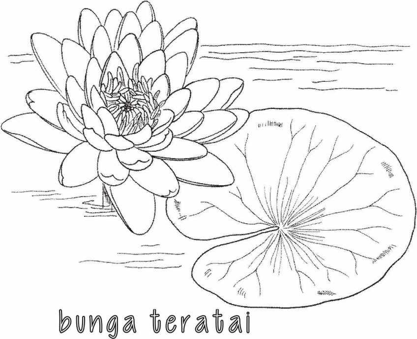 Mewarnai Bunga Teratai Alamendah S Blog