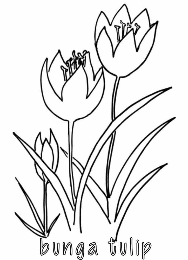 Mewarnai Bunga Tulip Alamendah S Blog