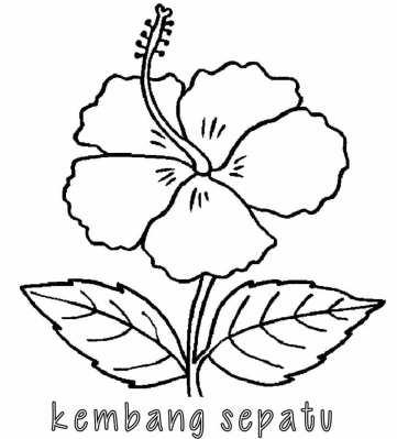 Kumpulan Mewarnai Gambar Bunga Indonesia Alamendah S Blog
