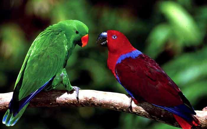 Tips Merawat Burung Nuri