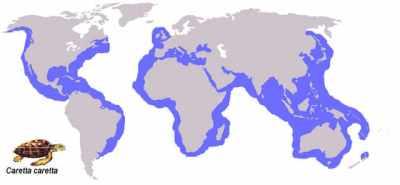 Daerah sebaran Penyu Tempayan (Caretta caretta)