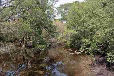 Hutan bakau sebagai lahan basah