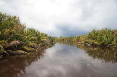 Lahan basah di Tanjung Puting