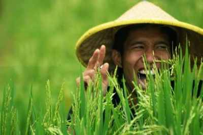 tanah untuk ketahan pangan