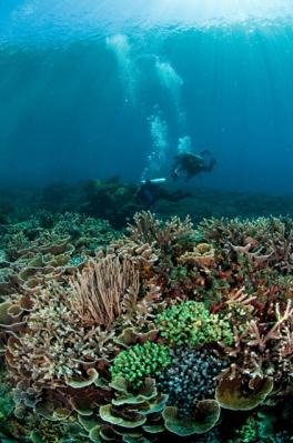 Dive Spot di Alor