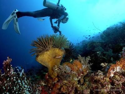 Dive Spot Bunaken