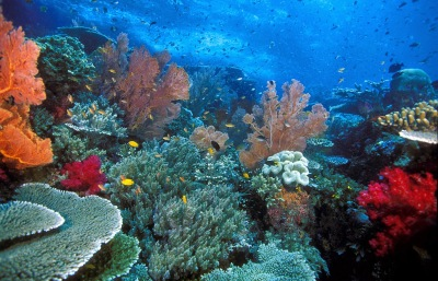 Dive Spot Raja Ampat
