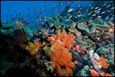 Dive Spot Tatawa Besar