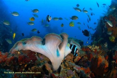 Dive Spot Tulamben Bali