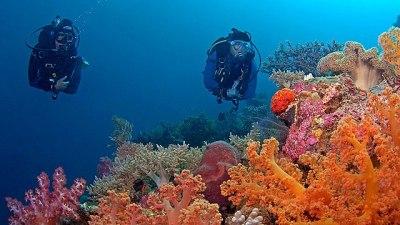 Dive Spot Wakatobi