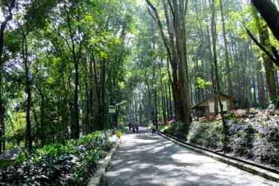 Ilustrasi Taman Kehati