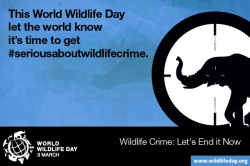 Media Gambar World Wildlife Day 5