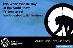 Media Gambar World Wildlife Day 6