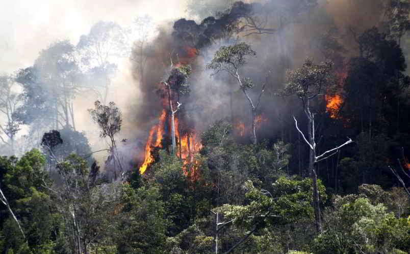 Kebakaran Hutan di Indonesia