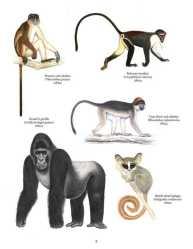 Primata Paling Terancam Punah (Afrika)