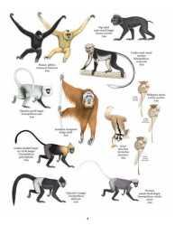 Primata Paling Terancam Punah (Asia)