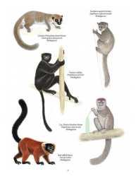 Primata Paling Terancam Punah (Madagaskar)