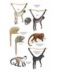 Primata Paling Terancam Punah (Neotropics)